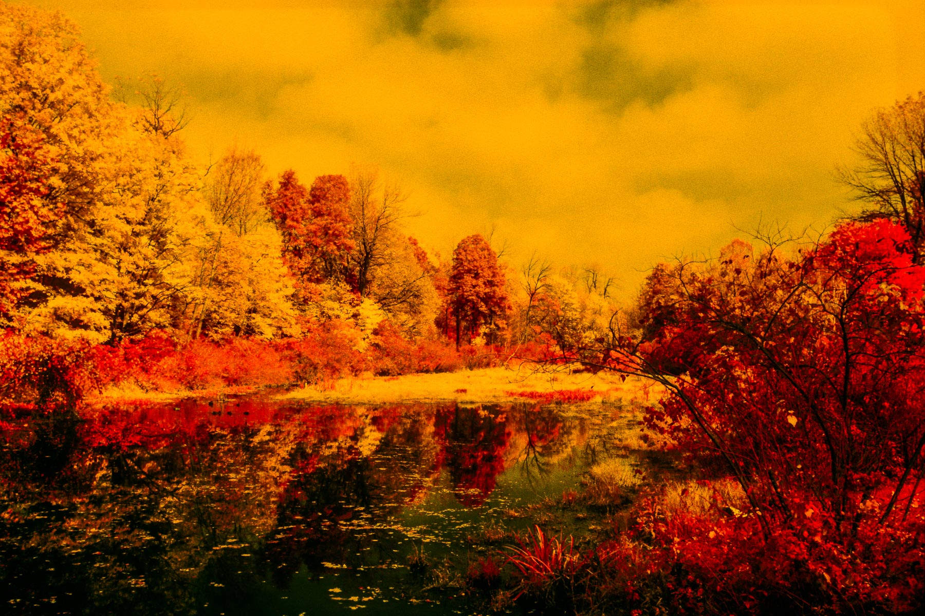 JohnMacLean_20131029_Seeleys_Pond_IR-2