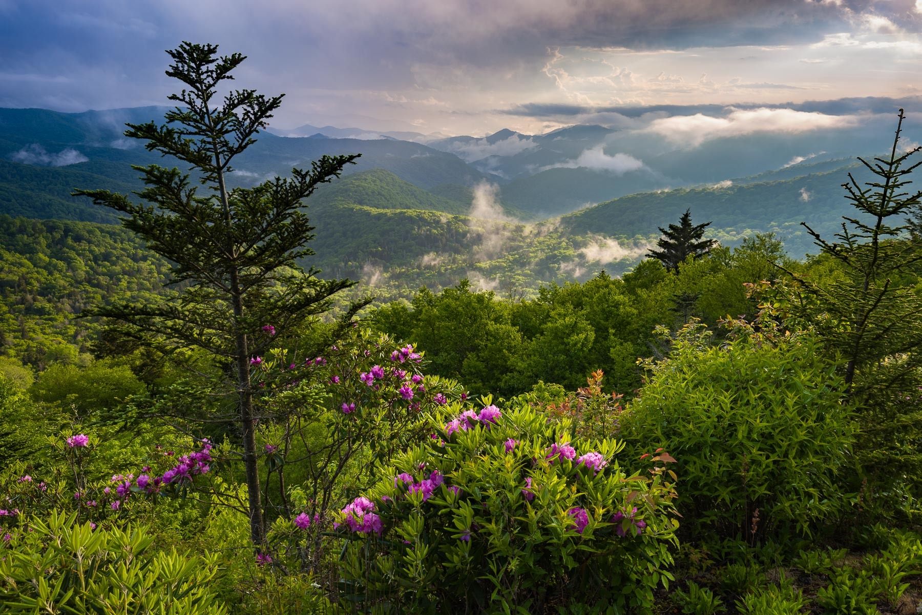 Clearing Storm down the valley and Rhododendron